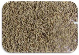 Cumin-Seeds-Europe-Quality