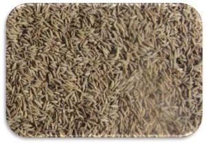 Cumin-Seeds-Singapore-Quality