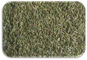 Fennel-Seeds-Europe-Quality