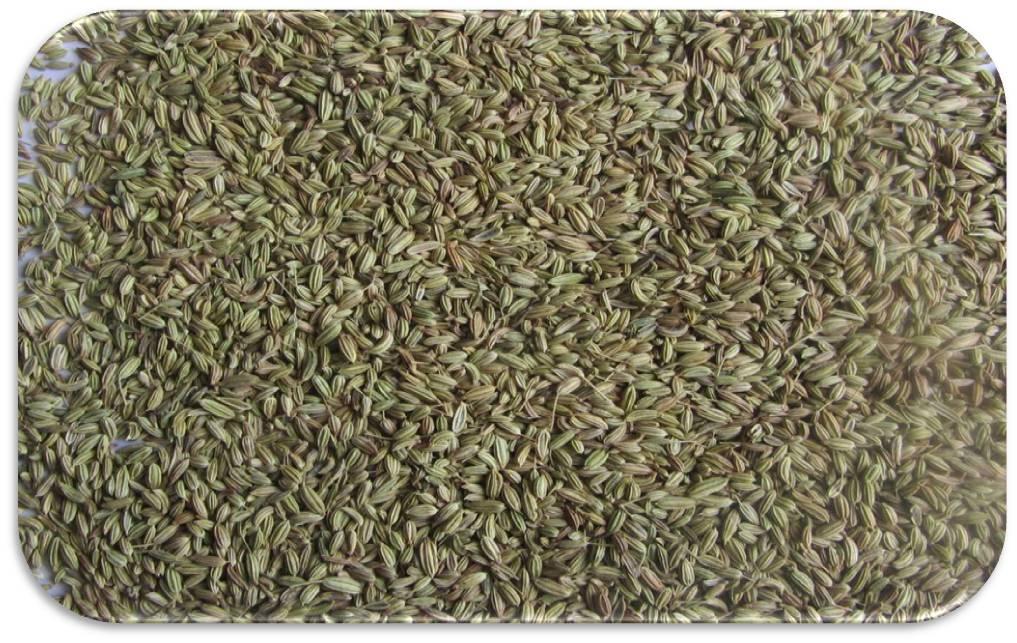Fennel-Seeds-Singapore-Quality