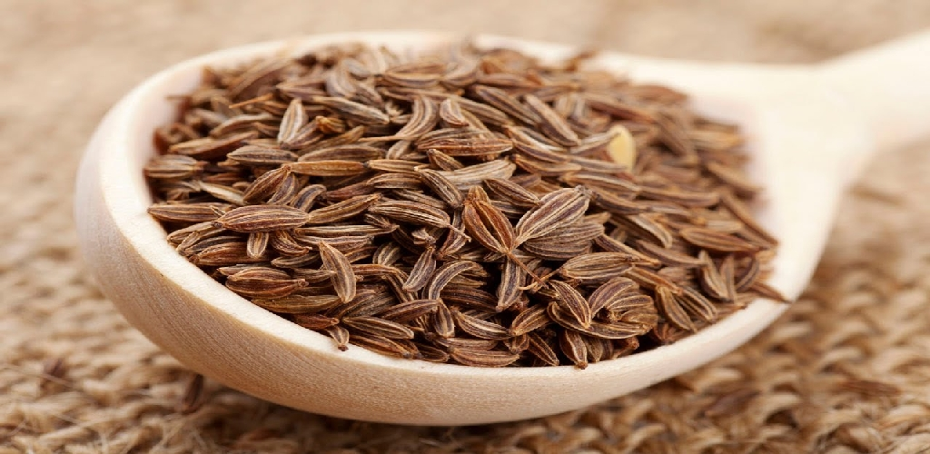 CUMIN SEEDS MANUFACTURER EXPORTER SUPPLIER UNJHA GUJARAT INDIA